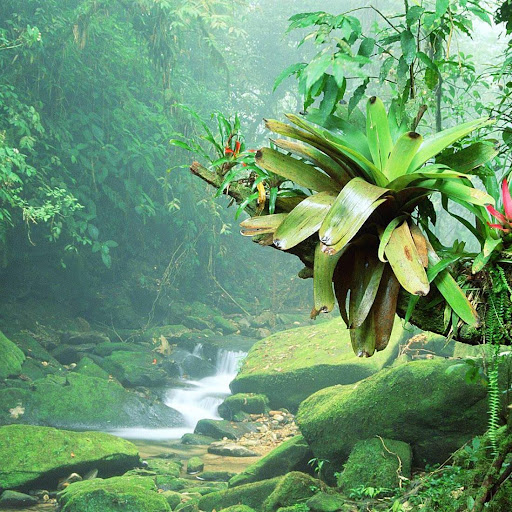 ジャングル ライブ壁紙