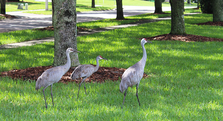 Wildlife to look out for around your villa in Orlando
