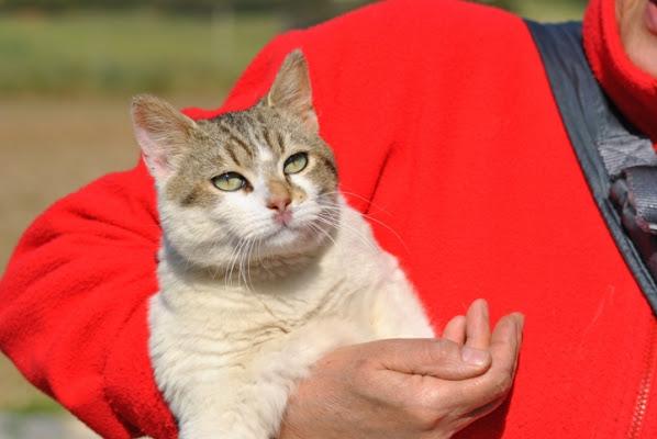 Trasparenza felina! di francescap