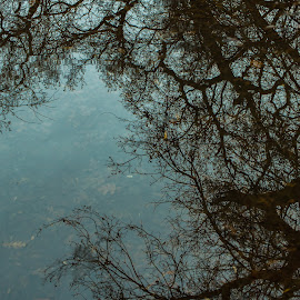 Puddle Reflection by Michael Mercer - Abstract Macro ( water reflection, puddle, leaves, tree, branches )