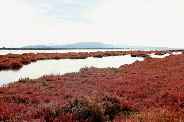 Laguna di Marceddi di ariosa