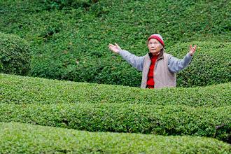Photo: Tai Chi at Kowloon Park, Hong Kong