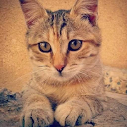 بسة عمان
