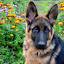 by Eugenija Seinauskiene - Animals - Dogs Puppies