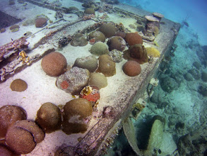 Photo: A wreck deliberately placed in the reef front zone in 1986, now supports a colourful variety of corals.