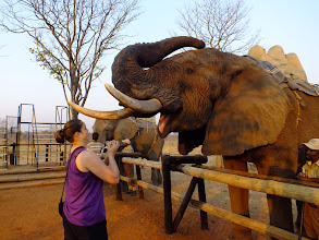 Photo: Shelley feeding one of the elephants.
