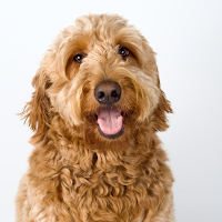 Book an Appointment with Hairy Hobby Pet Services - Pet