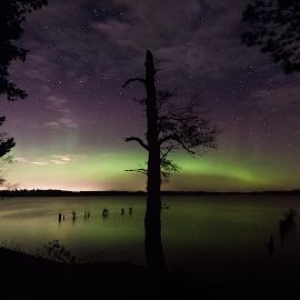 Missing by Manu Heiskanen - Uncategorized All Uncategorized ( sky, light, longexposure, missing, tree, grenn, clouds, aurora, northernlights, water )