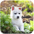 Home Animal.. file APK for Gaming PC/PS3/PS4 Smart TV