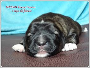 Photo: mała miała być Maysan, ale ostatecznie nadaliśmy jej imie MARUSHA Ksiezyc Pamiru