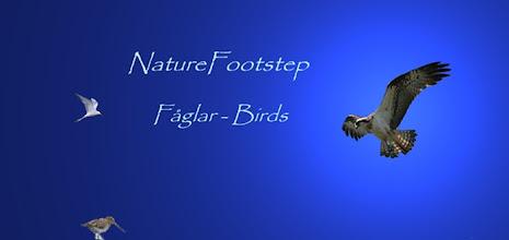 Photo: NatureFootstep Fåglar - Birds http://nfbird.blogspot.com