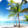 Palm Tree Full HD Wallpaper APK