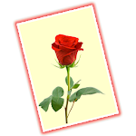 Greeting Cards Gallery - Free Icon
