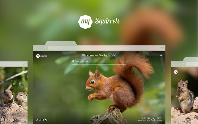 My Squirrels - Cute Squirrel HD Wallpapers