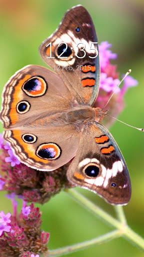 Peacock Butterfly Wall Lock