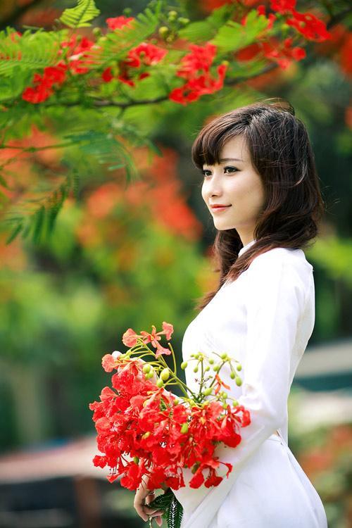 Hoa-phuong.jpg