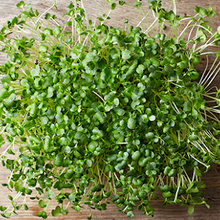 Broccoli Sprouts Dip.