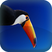 Toucan  Live Wallpaper