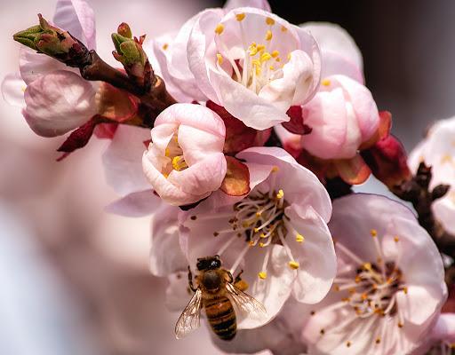 Primavera non bussa, lei entra sicura... di Sergio Locatelli