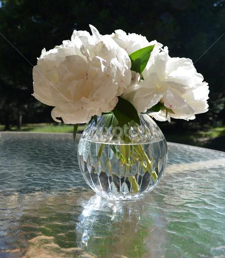 White peonies flower arangements flowers pixoto white peonies by barbara brown flowers flower arangements natural light vase white mightylinksfo