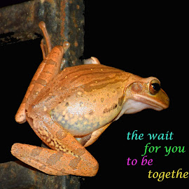 frog by SANGEETA MENA  - Typography Quotes & Sentences