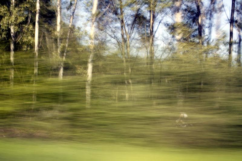 Corro tra il verde  di Cimabue