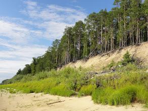 Photo: Лес на обрыве. Сухо, брусника только краснеть начинает.