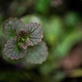 by Emilia Wlodarczyk - Nature Up Close Gardens & Produce (  )