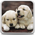 Puppies Live Wallpaper apk