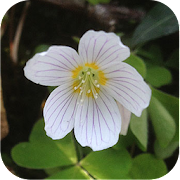 App Icon for Flowers of Britain App in Czech Republic Google Play Store