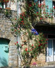 Photo: Le Rosier Rouge, Vallon Pont d'Arc, Ardèche, France