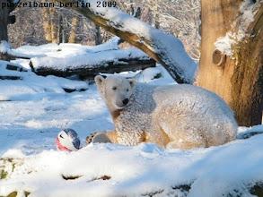Photo: Schneeknut mit Ball ;-)