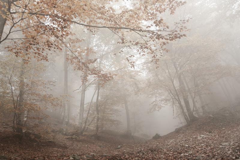 Una giornata nebbiosa d'autunno di mariateresatoledo