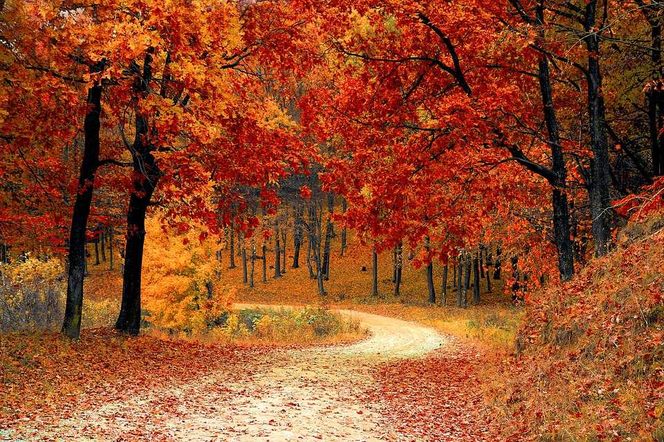 Free photo: Fall, Autumn, Red, Season, Woods - Free Image on ...