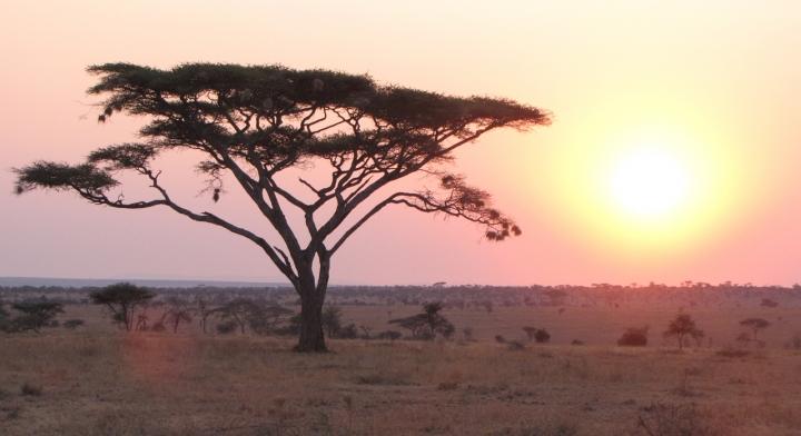 Africa di vlao