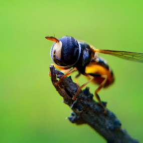 horse fly by Teguh Teo - Instagram & Mobile Android