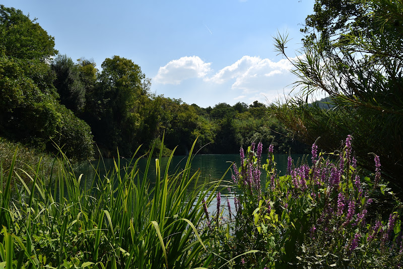 Tra arbusti e fiori di Ilaria Bertini