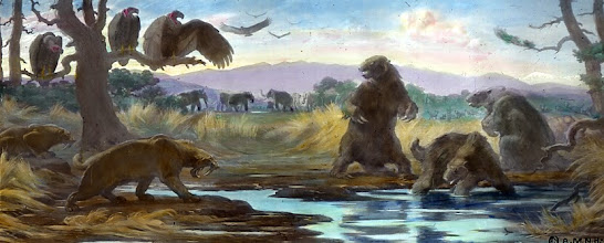 Photo: The La Brea Tar Pits in California are the most famous of many tar pits around the world that have preserved the fossil remains of extinct megafauna from the last ice  age more than 30 Kya. The only human evidence recovered so far- is the crushed skull of a female dating to 9 Kya. Radiocarbon dating has shown the Clovis period to range from 13,300 to 12,800 calendar years ago, giving the culture only several hundred years to reach the tip of South America. The Clovis-first model says it would have taken anywhere from 700 to 1,000 years but archaeological sites in South America have yielded the same dates. It now seems the peopling of the Americas was not a singular event but instead- people arrived at different times and took different routes and potentially came from different places.  http://news.nationalgeographic.com/news/2007/02/070223-first-americans_2.html http://en.wikipedia.org/wiki/La_Brea_Tar_Pits Artwork: Charles S. Knight  (1874-1953) http://en.wikipedia.org/wiki/Charles_R._Knight
