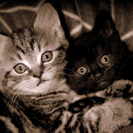 by Hilja Mulder - Animals - Cats Kittens