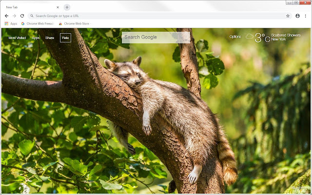 Raccoon HD Wallpapers Raccoon New Tab