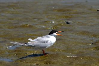 Photo: Tern