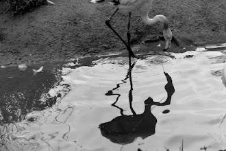 Photo: Spiegelung