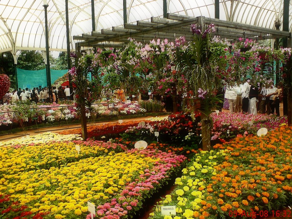 how-to-plan-a-first-date-in-bangalore_lalbagh_botanical_garden