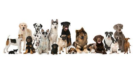 Hondenvoeding I Kattenvoeding