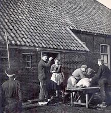 Photo: Varken slachten bij Berend en Catrien Nijhof