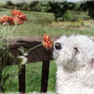 shaggy smelling flowers.jpg