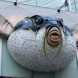 Torafugutei, blowfish restaurant in Tokyo, Tokyo, Japan