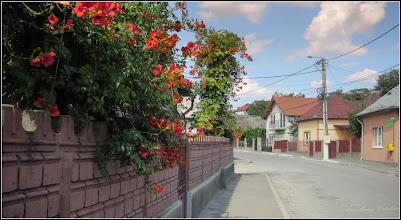 Photo: Trâmbiță, Luleaua turcului (Campsis radicans) - de pe Str. Aurel Vlaicu - 2017.09.10