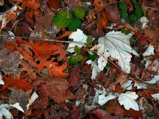 Leaves and leaves  di valedm