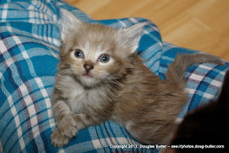 Photo: Another photo of the smallest of the litter -- almost like she wanted to pose for the camera!
